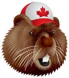 Castor canadiense Foto de archivo
