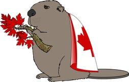 Castor canadiense Foto de archivo libre de regalías