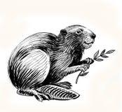 Castor con la rama libre illustration