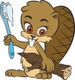 Castor e escova de dentes Fotos de Stock Royalty Free