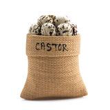 Castor Royalty Free Stock Image