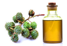 Castor oil Royalty Free Stock Image