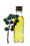 Castor oil bottle. With castor fruit bunch isolated on white background royalty free stock photography