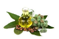 Castor oil bottle with castor fruits, seeds and leaf. Royalty Free Stock Image
