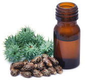 Castor oil with dry and green beans Royalty Free Stock Photos