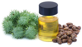 Castor oil with dry and green beans Royalty Free Stock Images