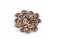 Castor oil plant seeds. Royalty Free Stock Image