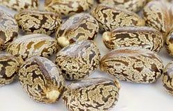 Castor oil seeds. Ricinus communis stock photos