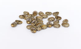 Castor oil seeds Royalty Free Stock Photo