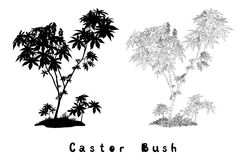 Castor Plant Contours, Silhouette and Inscriptions Stock Photos