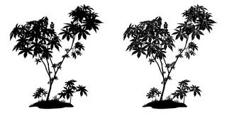 Castor Plant Contours and Silhouette Stock Image
