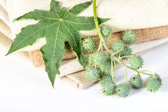 Castor plant and linen Royalty Free Stock Photography