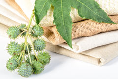 Castor plant and linen Royalty Free Stock Images