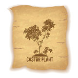 Castor Plant on Old Paper Stock Photography