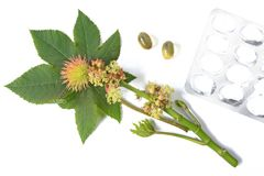 Castor plant - Ricinus communis Stock Photo