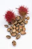 Castor seeds (Ricinus communis) Royalty Free Stock Photo