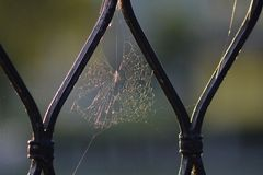 Castte Grid. Spider web on the castle grid with sun backlight, smith´s work Royalty Free Stock Photos