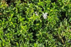 Castus στον κήπο της ευτυχίας Στοκ εικόνα με δικαίωμα ελεύθερης χρήσης