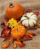 Casual collection of pumpkins and leaves on burlap Stock Photos