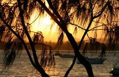 Casuarina gegen The Sun Stockbild
