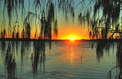 Casuarina Sunrise Stock Photos
