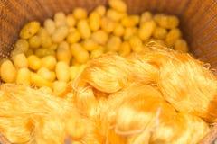 Casulos de seda e linhas de seda cruas Fotografia de Stock Royalty Free