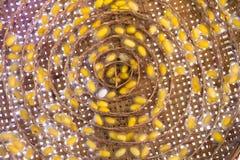Casulos do bicho-da-seda Imagens de Stock