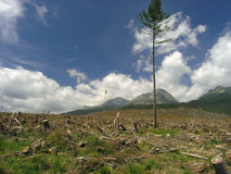 Catástrofe ecológica Fotografia de Stock