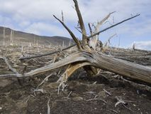 Catástrofe ecológica Imagem de Stock
