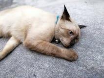 cat sad pet royalty free stock photos