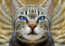 Cat�s eyes Royalty Free Stock Images