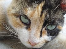Cat's seductive eyes. Beautiful green eyes of homeless cat Stock Images
