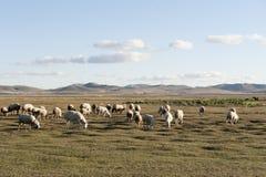 Catégories de paysage : Fengning : Paysage du nord de prairie de Pékin particulièrement les Etats-Unis Image libre de droits