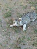 CAT动物,寿命2到6年 免版税图库摄影