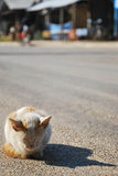 CAT在冬天 免版税库存图片