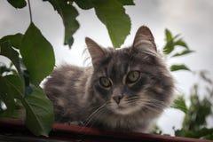 CAT神色 免版税图库摄影
