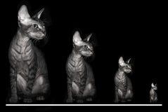 CAT ЖДЕТ ВАШ ЧАС ЗВЕЗДЫ стоковое изображение rf