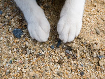 Cat& x27 πόδια του s στην άμμο Στοκ Εικόνες