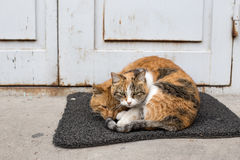 Cat& x27; влюбленность s Стоковые Изображения