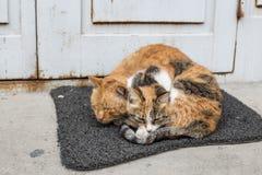 Cat& x27; влюбленность s Стоковые Фото