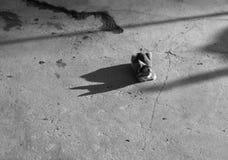 CAT ПОД СОЛНЕЧНЫМ СВЕТОМ СМОТРЯ СВОЮ ТЕНЬ Стоковое Изображение RF