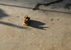 CAT ПОД СОЛНЕЧНЫМ СВЕТОМ СМОТРЯ СВОЮ ТЕНЬ Стоковые Фотографии RF