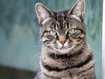 CAT представляя для камеры стоковые фотографии rf