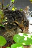 CAT САДА Стоковые Фотографии RF