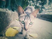 Cat& x27; сторона s с вблизи для любимчиков Стоковое фото RF