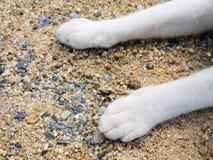 Cat& x27; 在沙子的s脚 免版税库存照片