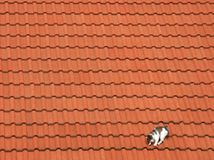 Cat #04. Photo of a cat on the roof stock photography