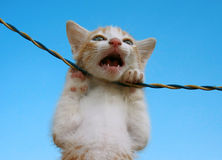 Cat. Cute cat hanging on electric wire against blue background Stock Photo