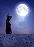 Cat. Looking moon at night Royalty Free Stock Photo