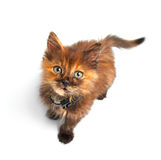 Cat Stock Images